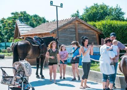 Megnyitotta kapuit a családi napon a Vérteslovas portája a VIVBER Kft. családjai számára!